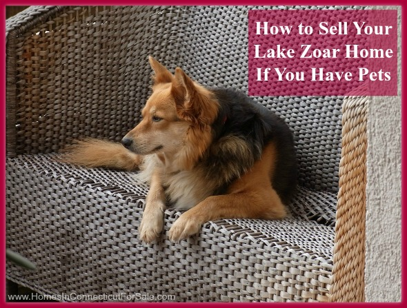 Magnificent How To Sell Your Lake Zoar Home If You Have Pets Interior Design Ideas Gentotryabchikinfo